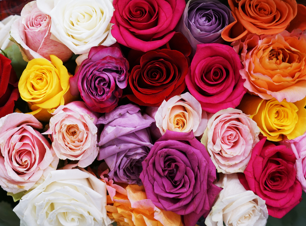 fresh colorful roses in a bouquet as background
